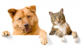 GetARoom: Looking For Pet Friendly Hotels? Search Now!
