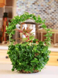 Organic Bouquet: Potted Trees & Eco-Friendly Plants Make Great Gifts