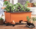EarthBox: Shop For Replant Kits
