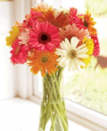 Organic Bouquet: $10 Off 15 Sweet And Cheerful Gerbera Daisies