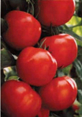 Rush Industries: Two Italian Tree Tomatoes At Just $6.98