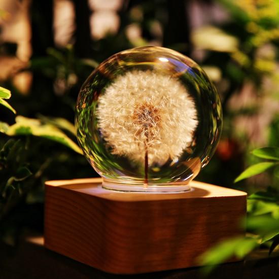 Coocepts: Dandelion Mood Light - 6cm For $279