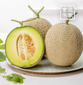 CJmall: 52% Off Honeydew Melon