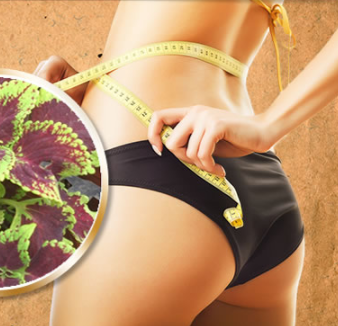 WeightLoss: Forskolin Fuel - Popular Diet Pills