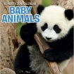Calendars: Baby Animals Mini Wall Calendar